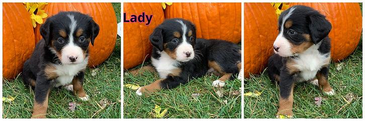 Lady - female - orange.jpg