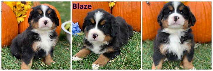Blaze- male - gray.jpg