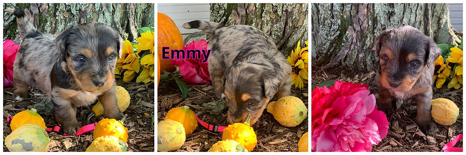 Emmy - hot pink.jpg