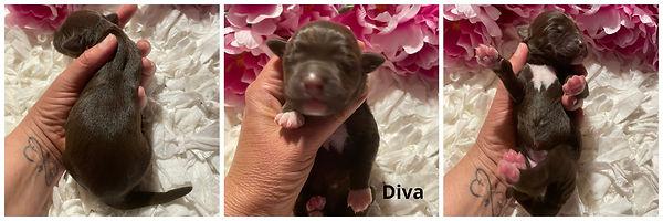 Diva- 5-20-21.jpg