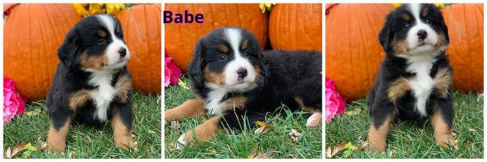 Babe - female - red.jpg