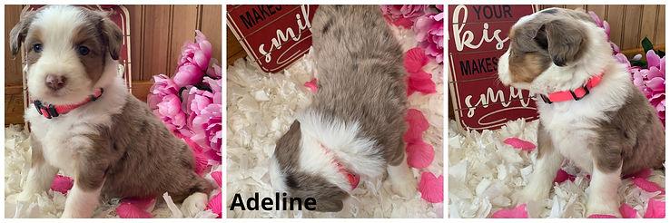 Adeline.jpg