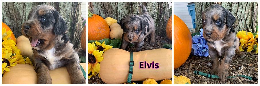 Elvis - dk green.jpg