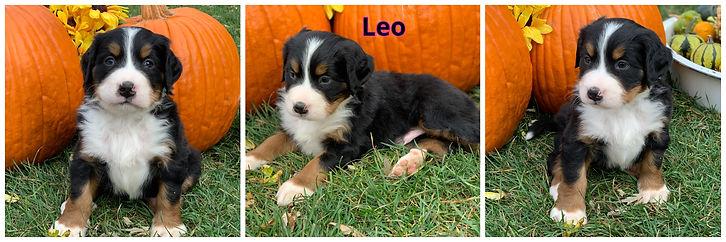 Leo - male - blue.jpg
