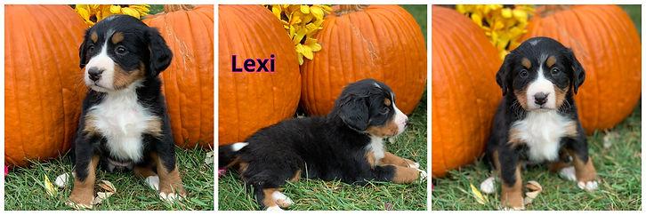 Lexi - female - hot pink.jpg