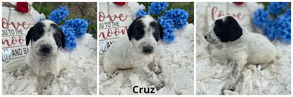 Cruz - 4-9-21.jpg