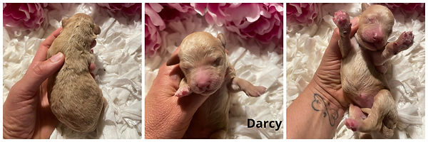 Darcy- 5-20-21.jpg