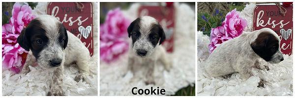 Cookie - 4-9-21.jpg
