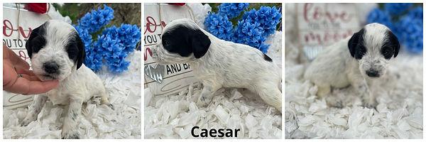Caesar - 4-9-21 (1).jpg
