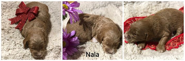 Nala (1).jpg