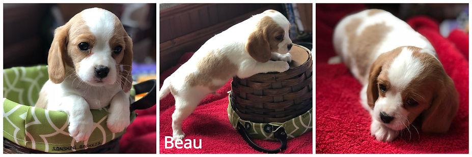 Beau.jpg