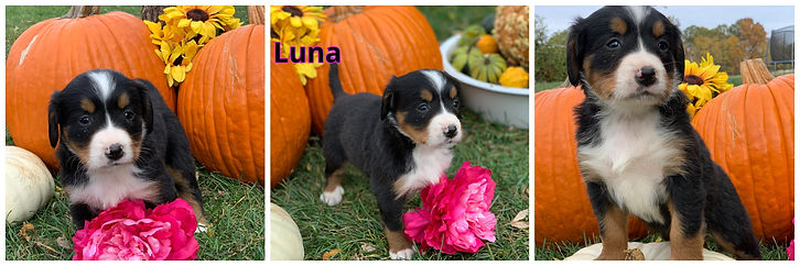 Luna - female - red.jpg