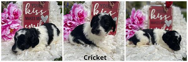 Cricket - 4-9-21.jpg