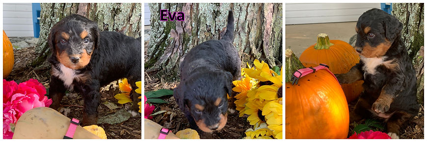 Eva - lt pink.jpg