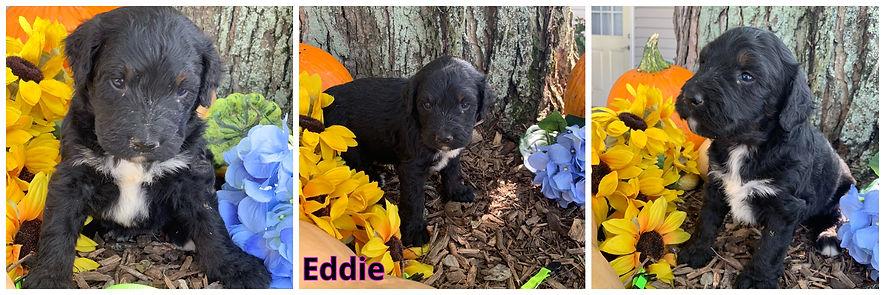 Eddie - yellow-green.jpg