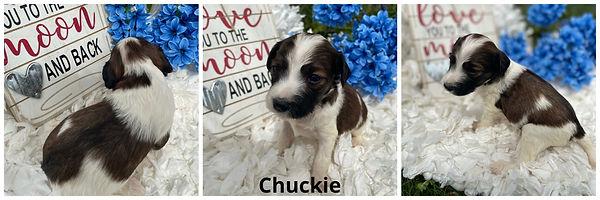 Chuckie - 4-9-21.jpg
