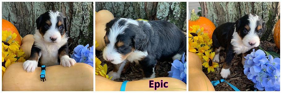 Epic - lt bluen.jpg