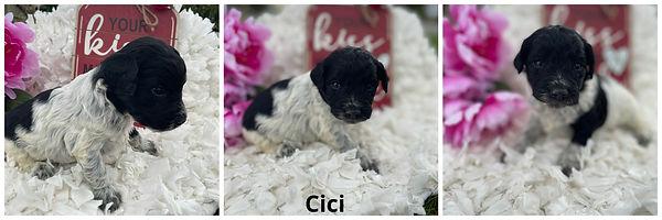 Cici - 4-9-21.jpg