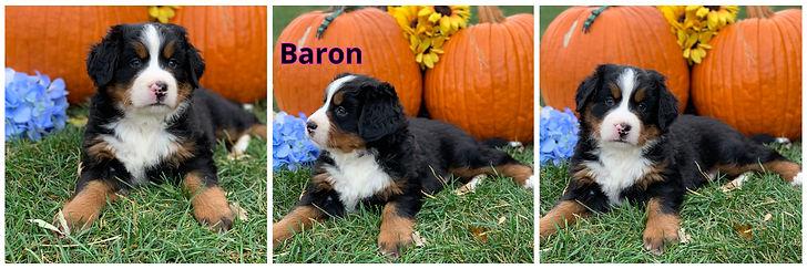 Baron - male - green.jpg