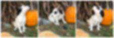 Bunny - female.jpg