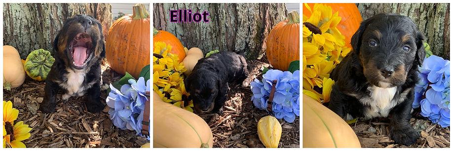 Elliot - brown.jpg