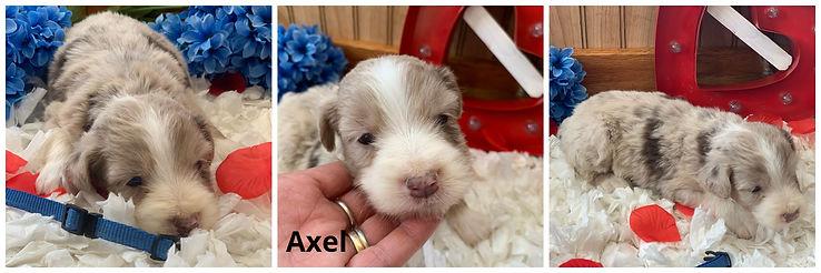 Axel.jpg