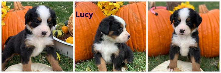 Lucy - female - lt pink.jpg