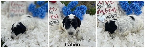 Calvin - 4-9-21.jpg