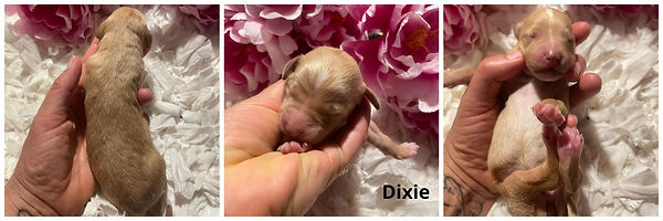 Dixie - 5-20-21.jpg