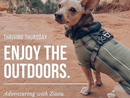 Adventuring with Zizou: How to Safely Adventure With Your Pup