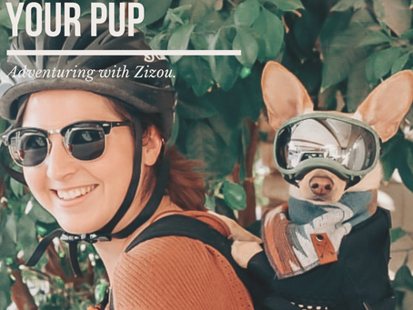 Adventuring with Zizou: Biking with your pup!