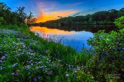 Eau Claire River Crown Vetch Sunset