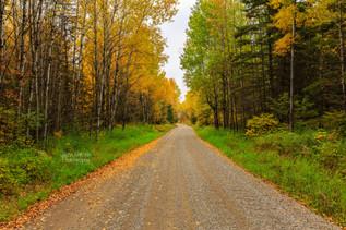 Fall on the Mooseline (2016)