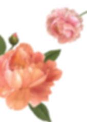 Fleurs Brochure-page-002.jpg