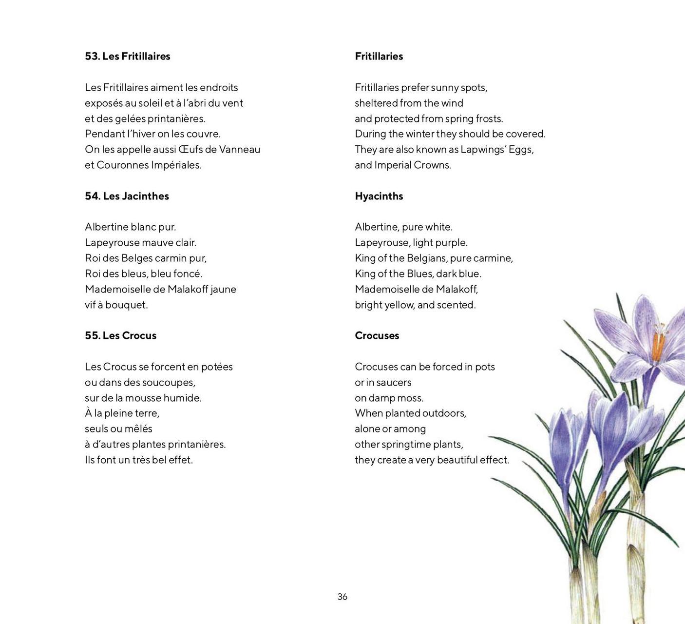 Fleurs | melodylouledjian