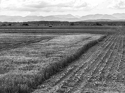 terres-agricoles-fondation-manasse.jpg