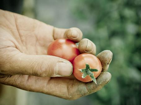 ミニトマト植えました!