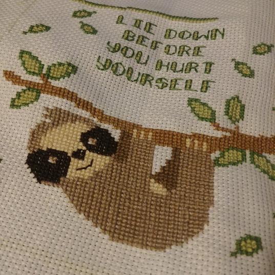 Sloth Close Up