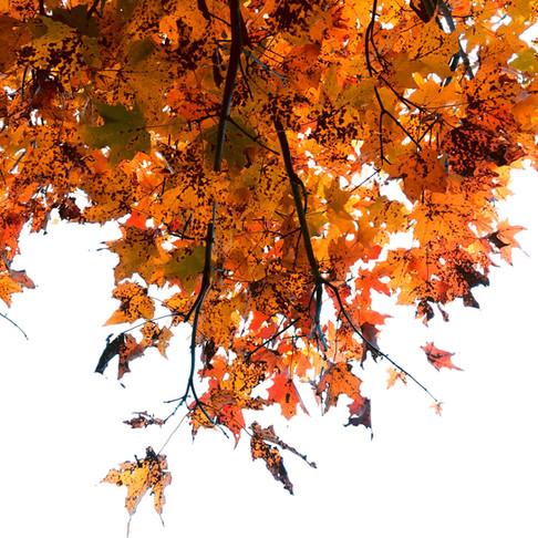 Autumn hath cometh