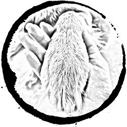Leading Paws Logo
