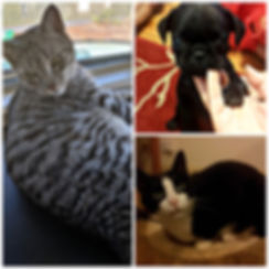 We had the pleasure of Pet Minding for tese adorable fur babies! (Tumble, Leaf and Felix)
