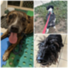 Some of Leading Paws beautiful Paw Pal members (Missy, Oscar and Ashley).