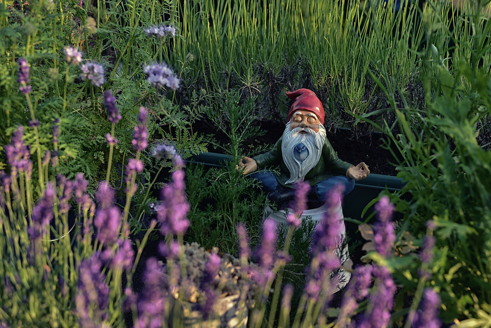 garden gnome meditating in the grass