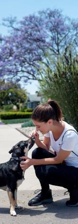 Leash Trainer Pet Care.jpg