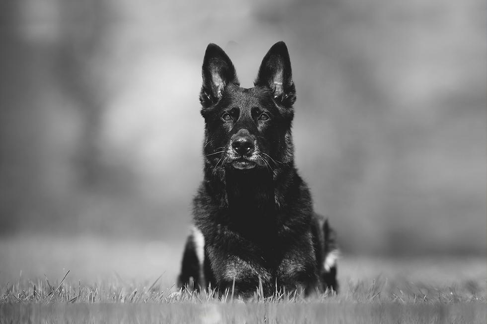 armydog03.png