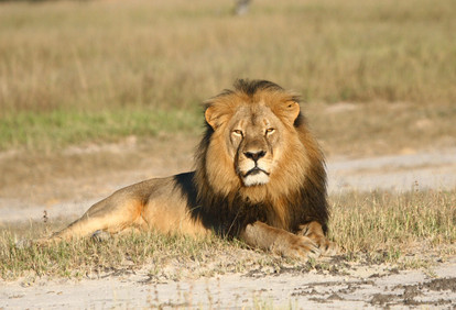 Cecil the lion, murdered by a dentist.