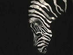 """""""Zebra Drinking"""""""