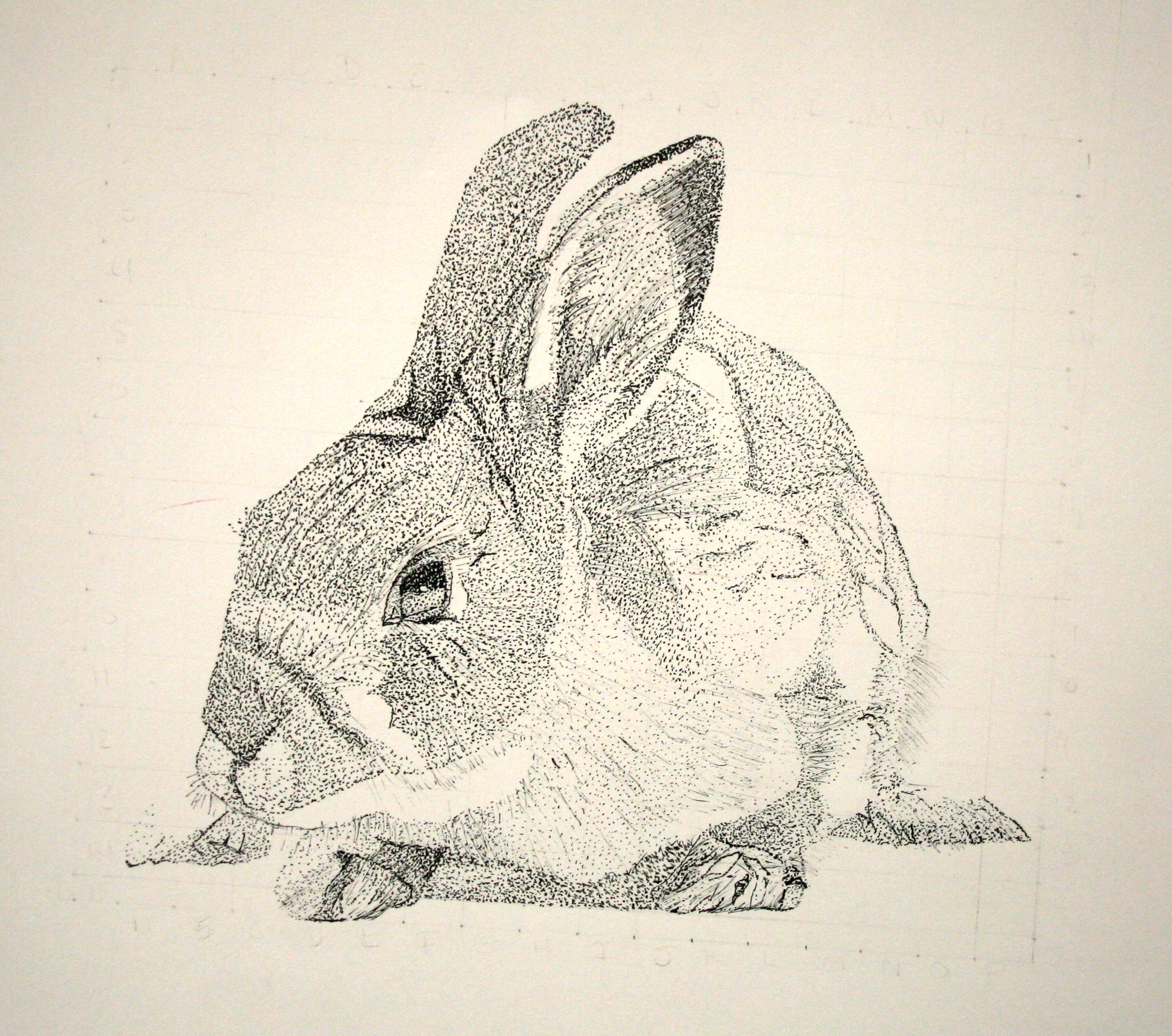 """Stippled Rabbit"""