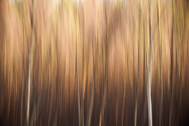 Abstract Silver Birch Trees 1