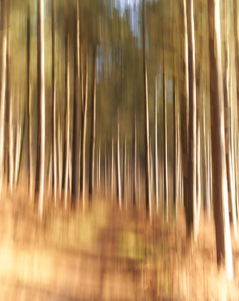 Clipstone Woods Abstract
